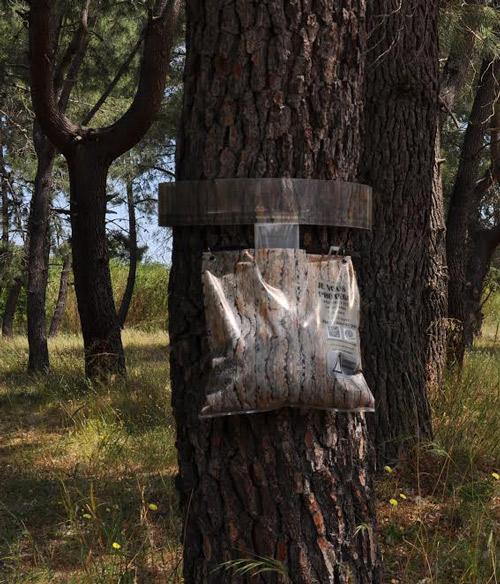 mesange-verte-2-lutte-alternative-ecologique-contre-chenille-processionnaire-du-pin
